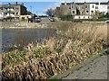 NT2370 : Craiglockhart Pond from the dam by M J Richardson