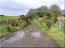 H6160 : Lane, Tullyglush by Kenneth  Allen