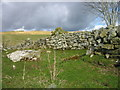 NY7790 : Possible remains of a bastle on the Black Middens site. by Les Hull