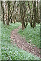SW8341 : Footpath through the woods above Cowlands Creek by Rod Allday