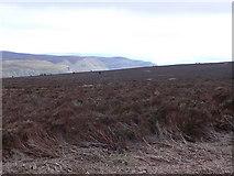 SJ2346 : View towards Eglwyseg Mountain from the eastern side of Cyrn-y-Brain by Eirian Evans