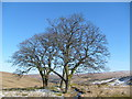 NY7945 : Sentinels of Coalcleugh by Roger Morris
