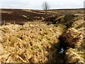 NS4281 : Burn near Auchincarroch Hill by Lairich Rig