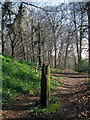 J3168 : Post and track, Barnett Demesne by Rossographer
