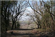 SX4970 : Buckland Monachorum: by the site of Grenofen viaduct by Martin Bodman