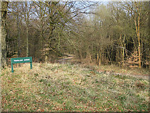 SO6210 : Trafalgar Avenue, Forest of Dean by Pauline E