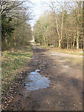 SO6210 : Two trails meet, Forest of Dean by Pauline E