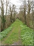 T0613 : Track near Killinick by David Hawgood