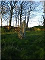SM8226 : Tremaenhir - standing stone by Richard Law