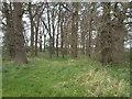 SE7825 : Day Hills Plantation by Glyn Drury