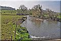 SN4211 : Downstream of the Gwendraeth Fach south east of Llandyfaelog by Mick Lobb