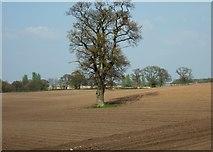 SJ8025 : Farmland near Woodseaves by Simon Huguet