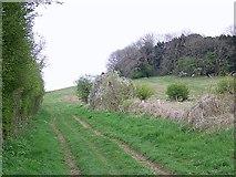 SU1420 : South Charford Drove by Maigheach-gheal