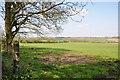 SS9774 : Pastureland at Crossways - Cowbridge by Mick Lobb