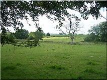 SS9712 : Mid Devon : Field & Dead Tree by Lewis Clarke