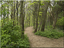 NZ5217 : Pennyman Woods by Stephen McCulloch