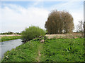 TG2422 : Footpath along the River Bure by Evelyn Simak