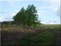 ST0489 : Mountain track on Mynydd Gelliwion by Mike Kohnstamm