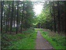 ST0489 : Forest track on Mynydd Gelliwion by Mike Kohnstamm