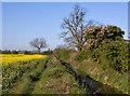 SE8640 : Weighton Common footpath by Paul Harrop