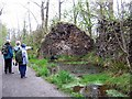 NY2622 : Uprooted trees by Roger Smith