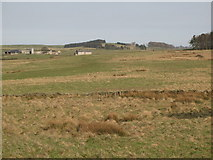 NY9569 : Rough pastures west of Errington Hill Head by Mike Quinn
