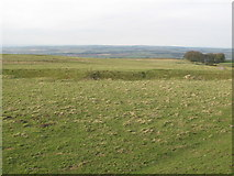 NY9569 : Pastures west of Errington Hill Head by Mike Quinn