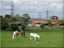 NZ5619 : Old Hall Farm by Stephen McCulloch