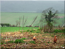 SU8413 : Looking north west from Lodge Hill Farm by Chris Gunns