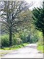 ST8350 : Bridleway, Clivey Farm by Maigheach-gheal