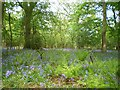 SJ6509 : Spring comes to Limekiln Wood by Richard Law