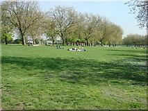 TQ3187 : Sunbathers in Finsbury Park by Oxyman