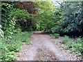 TQ4791 : Hainault Lodge Nature Reserve by Roger Smith