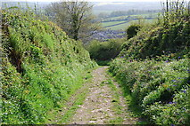 SX6256 : Ancient Trackway by jeff collins