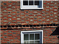 TQ8209 : Brick Detail at 9 High Street, Hastings by Oast House Archive