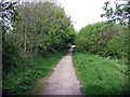 NZ4637 : Haswell to Hart cycle track by Roger Smith