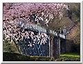 SJ6703 : The Iron Bridge in Spring by Ian Slater