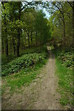 SO6115 : Footpath through the Forest of Dean by Philip Halling