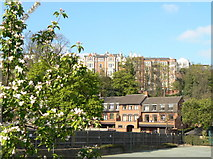 SK5639 : Houses in The Park by Alan Murray-Rust