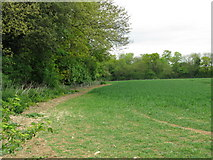 TR3051 : Field boundary with Betteshanger woods by Nick Smith