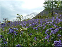 NY1618 : Rannerdale Bluebells by Martin Kirk