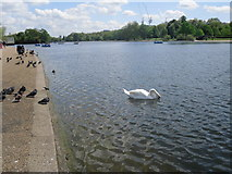 TQ2780 : The Serpentine - looking east by Peter S