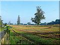 SO5620 : Stubble field near Pencraig by Jonathan Billinger