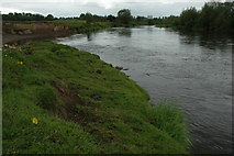 SO5635 : River Wye at Holme Lacy by Philip Halling