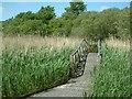 SM9202 : Reedbeds at Pwllcrochan by Robin Lucas