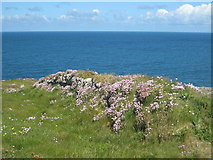 SW7761 : Cornish hedge on Pentire Point West by Rod Allday