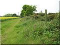 TG1426 : Track skirting oilseed rape field by Evelyn Simak