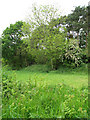 TG1426 : Overgrown railway embankment by Evelyn Simak