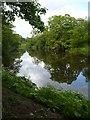 NU2405 : The river Coquet, Warkworth by pam fray