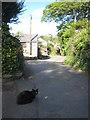 SW4528 : The hamlet of Tredavoe by Rod Allday